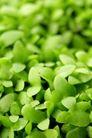 绿叶幼苗0066,绿叶幼苗,自然风景,