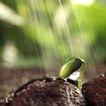 绿叶幼苗0071,绿叶幼苗,自然风景,