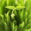 绿叶幼苗0075,绿叶幼苗,自然风景,