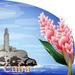 花之妖娆0124,花之妖娆,自然风景,