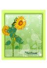 花之妖娆0146,花之妖娆,自然风景,向日葵
