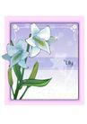 花之妖娆0148,花之妖娆,自然风景,纯净花儿