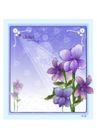 花之妖娆0167,花之妖娆,自然风景,温馨紫色