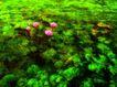 荷花意境0067,荷花意境,自然风景,碧绿荷塘