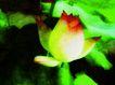荷花意境0085,荷花意境,自然风景,初开的荷花
