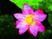 荷花意境0096,荷花意境,自然风景,荷花 鲜花