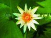 荷花意境0099,荷花意境,自然风景,白莲 花朵