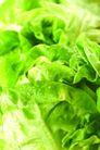 蔬菜瓜果0230,蔬菜瓜果,自然风景,