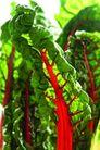 蔬菜瓜果0231,蔬菜瓜果,自然风景,