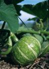 蔬菜瓜果0258,蔬菜瓜果,自然风景,