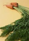 蔬菜瓜果0271,蔬菜瓜果,自然风景,