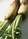 蔬菜瓜果0273,蔬菜瓜果,自然风景,