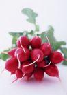 蔬菜瓜果0280,蔬菜瓜果,自然风景,