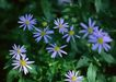 鲜花遍野0215,鲜花遍野,自然风景,