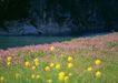 鲜花遍野0218,鲜花遍野,自然风景,