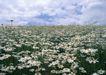 鲜花遍野0224,鲜花遍野,自然风景,