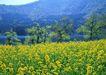 鲜花遍野0225,鲜花遍野,自然风景,