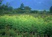 鲜花遍野0227,鲜花遍野,自然风景,
