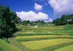 鲜花遍野0228,鲜花遍野,自然风景,