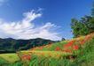 鲜花遍野0231,鲜花遍野,自然风景,