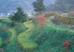 鲜花遍野0233,鲜花遍野,自然风景,
