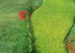 鲜花遍野0234,鲜花遍野,自然风景,