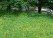鲜花遍野0237,鲜花遍野,自然风景,