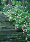 鲜花遍野0242,鲜花遍野,自然风景,