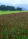 鲜花遍野0244,鲜花遍野,自然风景,