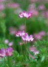 鲜花遍野0245,鲜花遍野,自然风景,