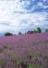 鲜花遍野0246,鲜花遍野,自然风景,
