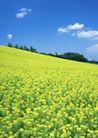 鲜花遍野0248,鲜花遍野,自然风景,