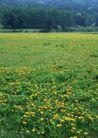 鲜花遍野0251,鲜花遍野,自然风景,