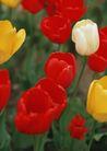 鲜花遍野0252,鲜花遍野,自然风景,