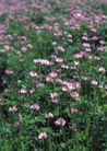 鲜花遍野0255,鲜花遍野,自然风景,