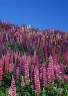 鲜花遍野0257,鲜花遍野,自然风景,