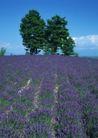 鲜花遍野0260,鲜花遍野,自然风景,