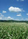 鲜花遍野0261,鲜花遍野,自然风景,