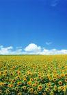 鲜花遍野0262,鲜花遍野,自然风景,