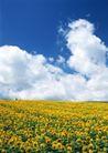 鲜花遍野0263,鲜花遍野,自然风景,