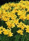 鲜花遍野0266,鲜花遍野,自然风景,
