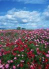 鲜花遍野0267,鲜花遍野,自然风景,