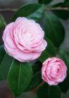 鲜花遍野0268,鲜花遍野,自然风景,