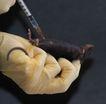 医疗针管0112,医疗针管,医学医药,