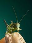 传统生活器具0031,传统生活器具,中华图片,昆虫 害虫 孔状