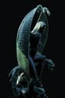 雕嗍0174,雕嗍,中华图片,石艺