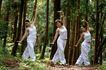 森林力量0007,森林力量,综合,
