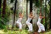 森林力量0011,森林力量,综合,