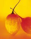 神奇的水果0087,神奇的水果,综合,
