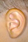 聆听世界0037,聆听世界,综合,耳朵 器官 耳廓